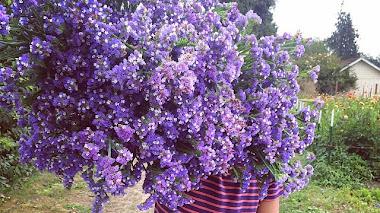 Una de Instagram: Floret Flower Farm