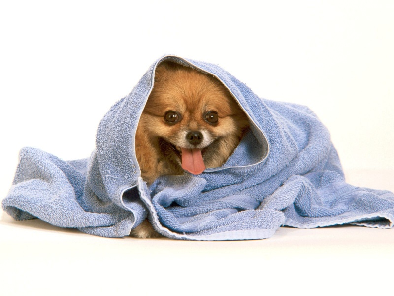 funny dog hd wallpaper - photo #29