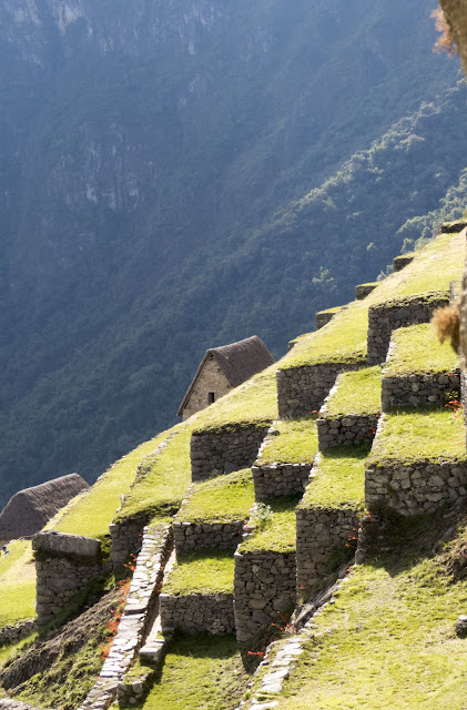 Photo of a terraced farm at Machu Picchu in Peru