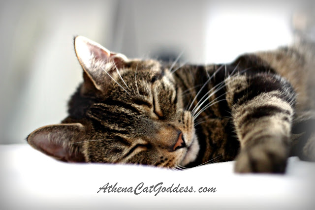 tabby cat sleeping