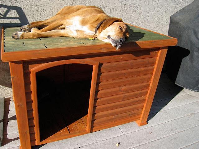 dog house design ideas
