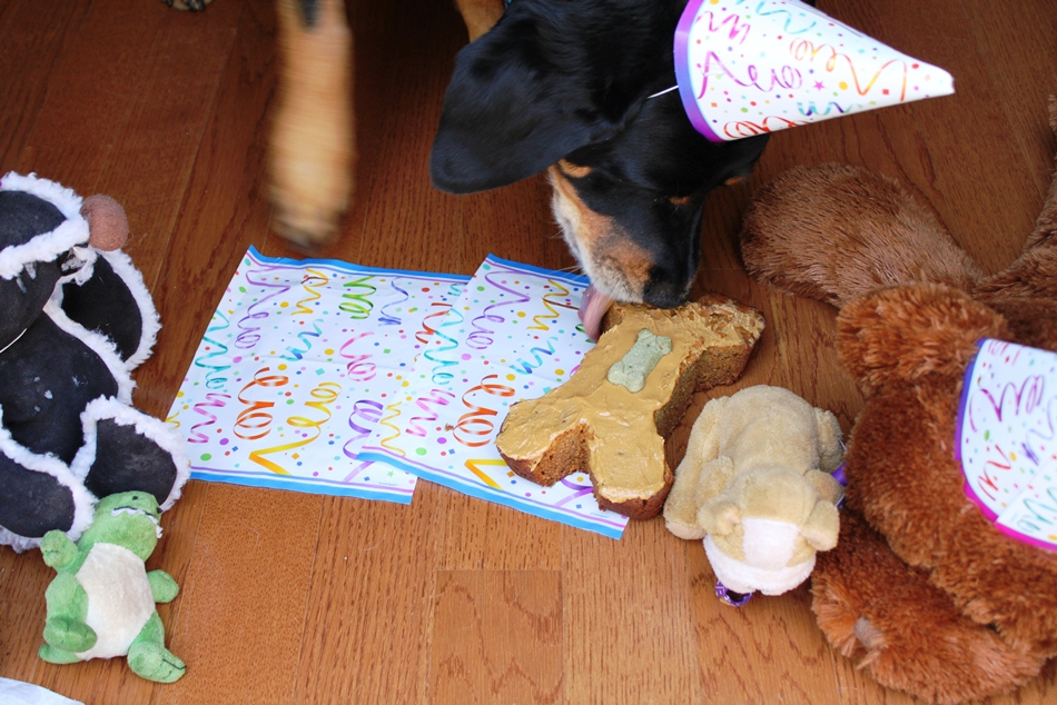 A Teaspoon And A Pinch Doggie Birthday Cake