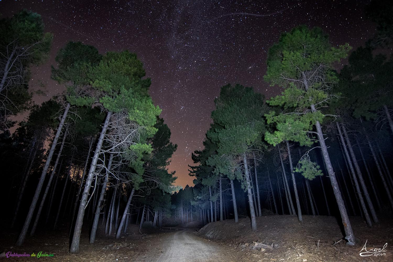 Bosque y estrellas durante el senderismo nocturno