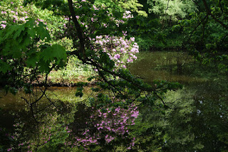 Blumen spiegeln sich auf der Wasseroberfläche eines Sees im Park