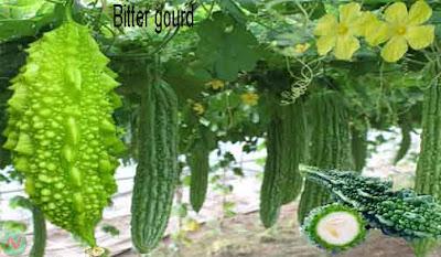 bitter gourd; bitter gourd vegetable