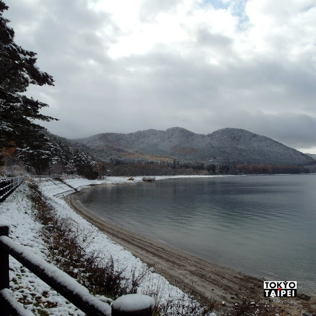 【田澤湖畔】來探望冰天雪地裡 睡眼惺忪的秋田犬