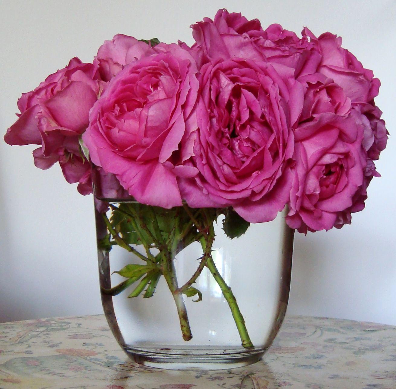 Giardino Cosa Piantare A Febbraio: FIORE RARO: Le Rose Del Giardino