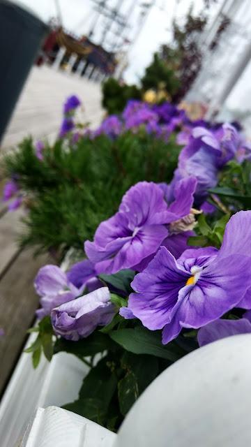 kwiaty | donice | fiolet | molo | sopot