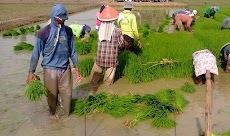 Peran Pemerintah dalam membantu para petani