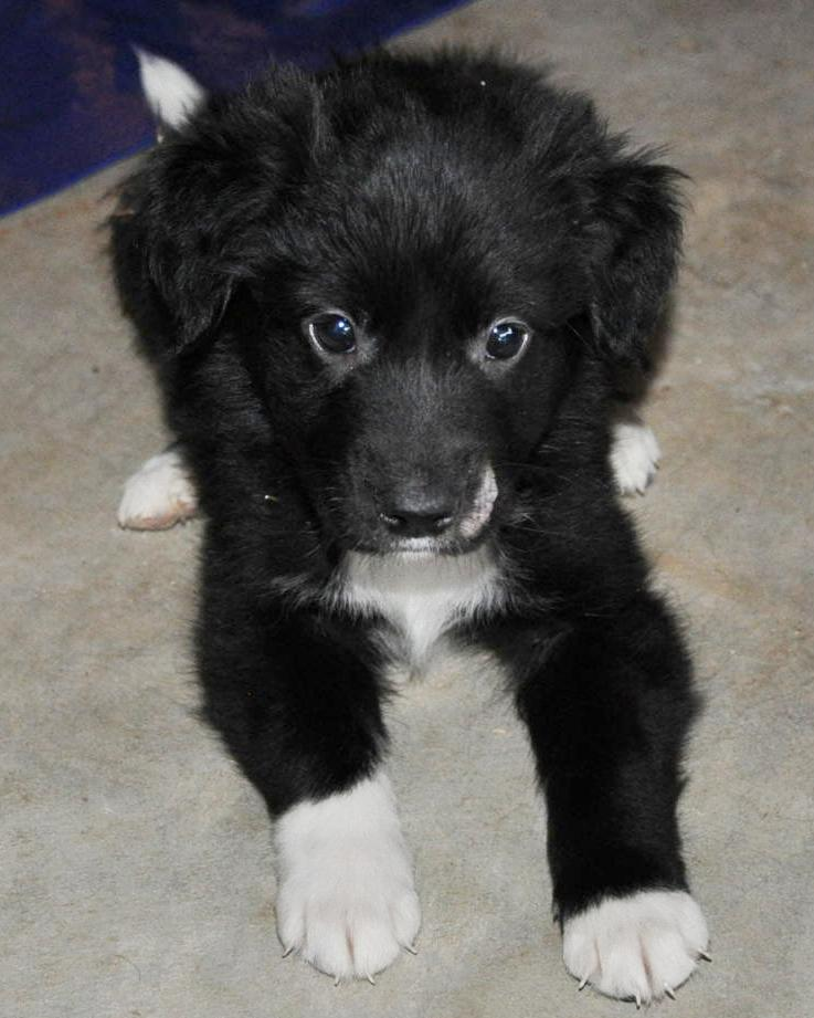 Black And White Fluffy Puppy | www.pixshark.com - Images ...
