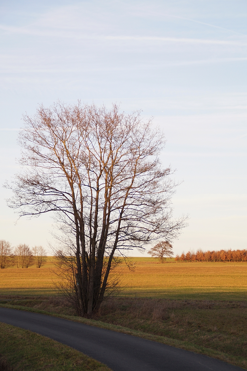 Spaziergang im Dezember: sonnig, kalt, hell