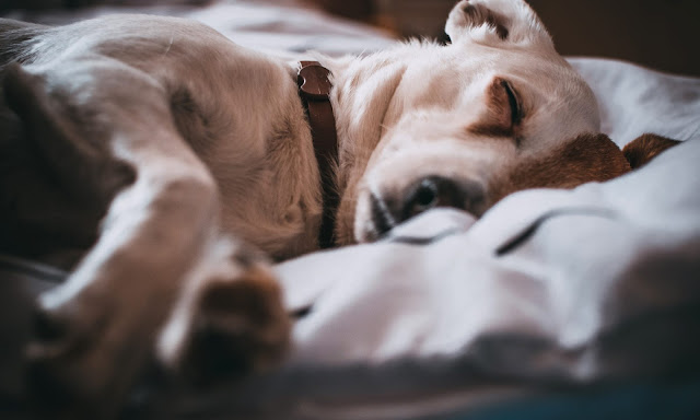 CBD for Dog Anxiety Symptoms