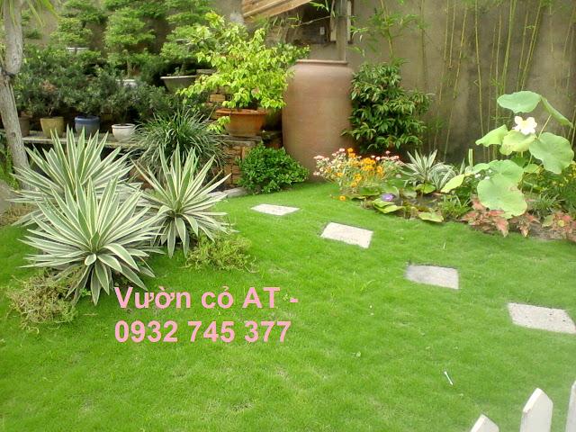 thảm cỏ