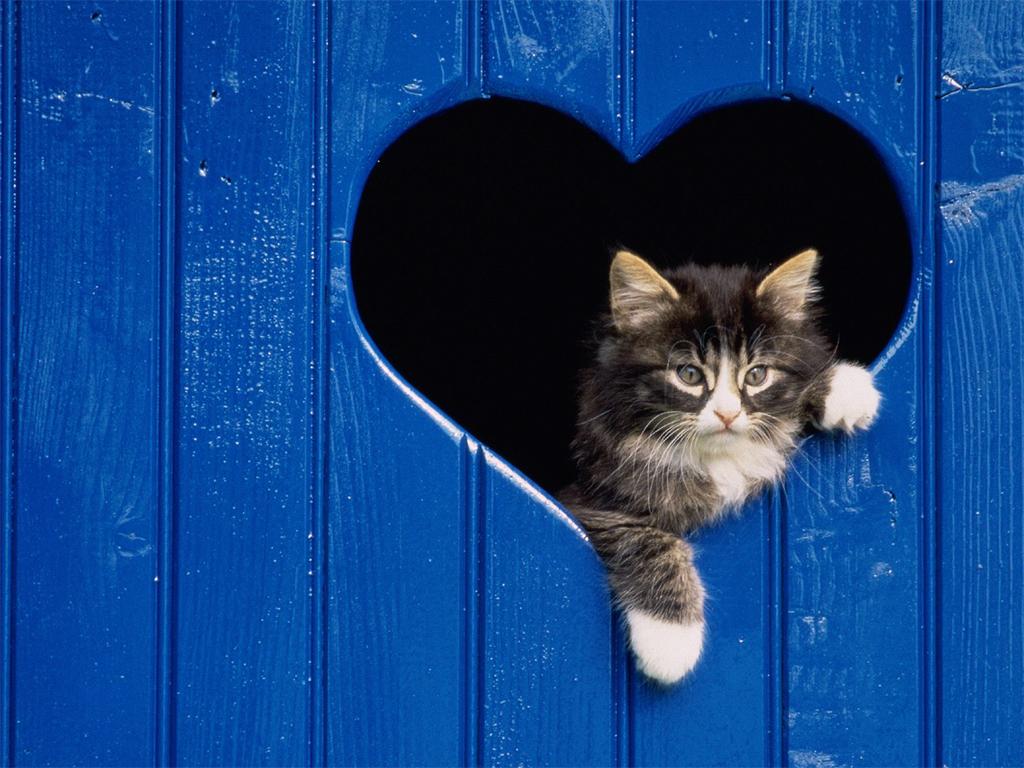 Wallpaper cats wallpapers for desktop - Kitten wallpaper ...