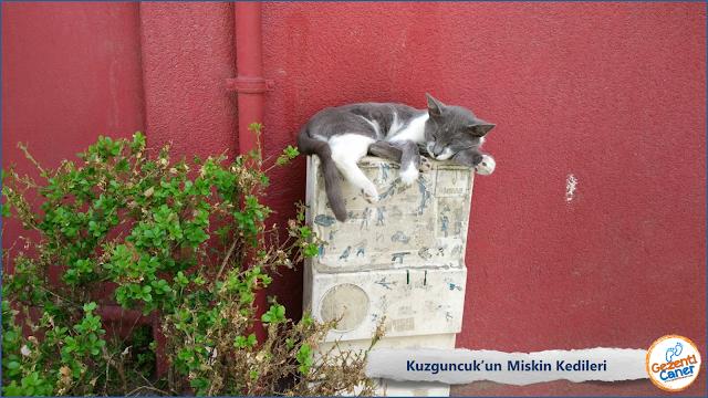 Kuzguncuk-Kedileri