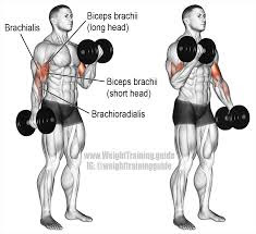 back and biceps workout, alt dumbbell curls