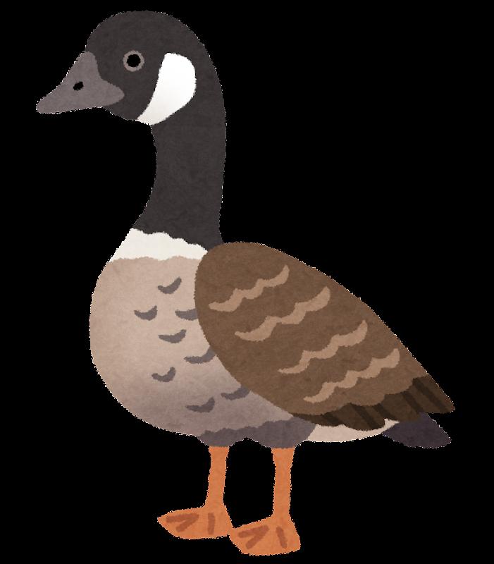 宮城県に飛来する渡り鳥の一種である,シジュウカラガンのイラストです。