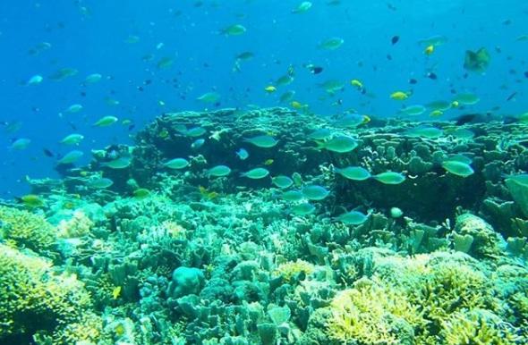 gili meno wisata lombok