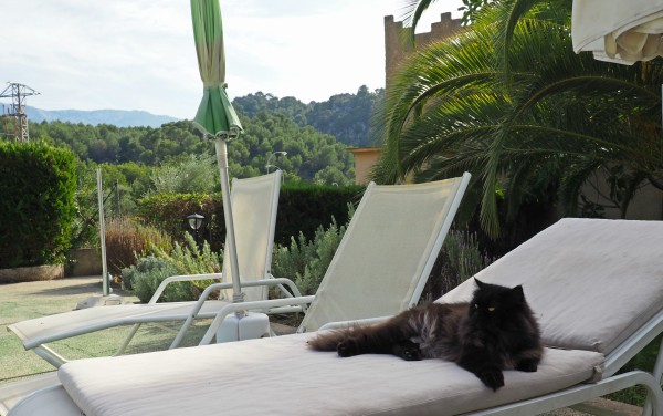 black cat on sun lounger