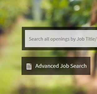 Image of Advanced Job Search Button on CalCareers