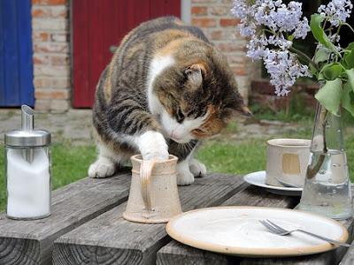 Nutrisi Kucing