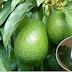 Enfermedades que curan y previenen las hojas de aguacate y que quizás no conocías