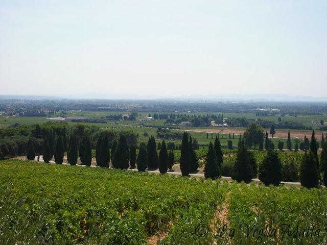 Chateauneuf Du Pape panorama