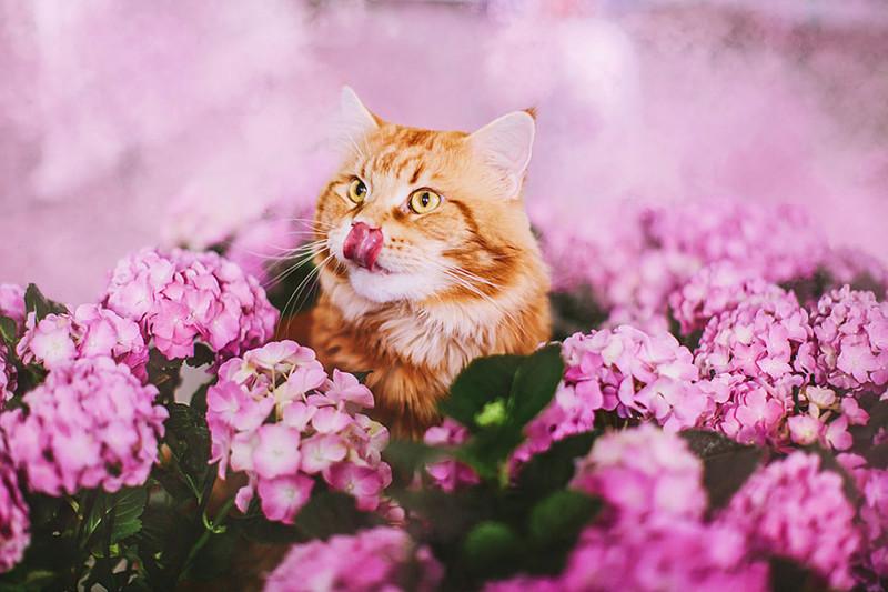 Смешной кот Котлета (13 фото)