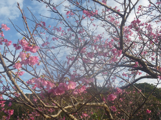 P1050212 - 浦島悦子「山の桜は泣いた――2018名護市長選」