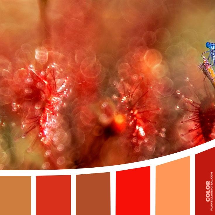 color_335