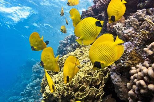 Fish Sound Exposure