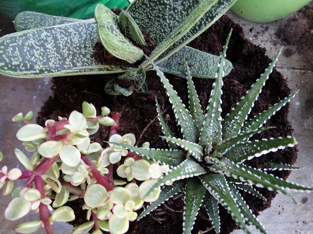 indoor tuinieren terrarium