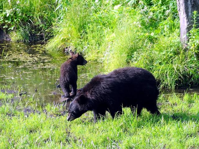 park omega bear