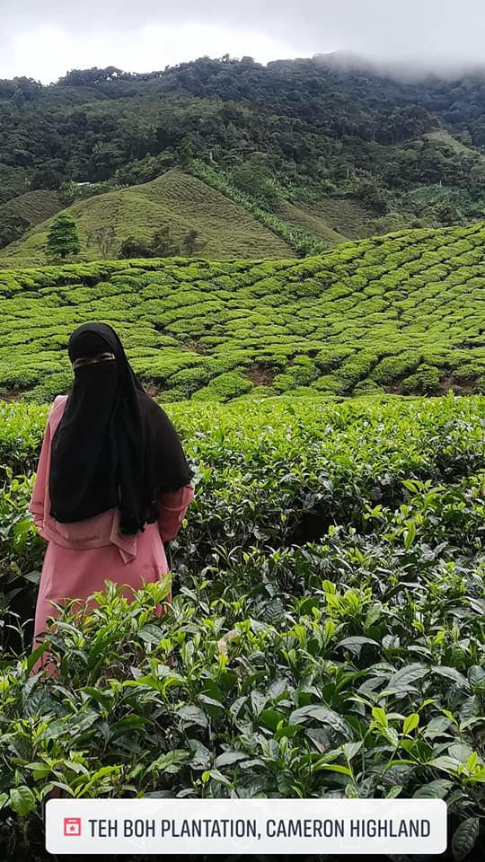 Pengalaman ke Ladang Teh Boh Cameron Highland [Boh Tea Plantation]