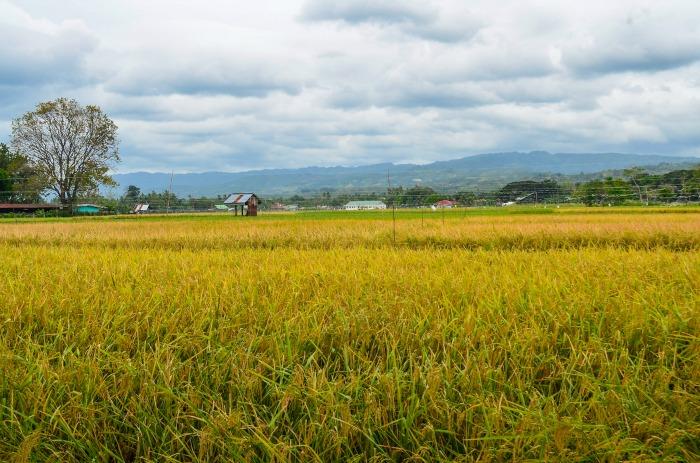 Argao, Cebu