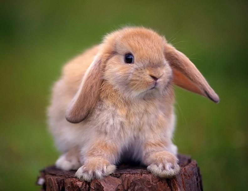 Gambar Lucu Kelinci betina