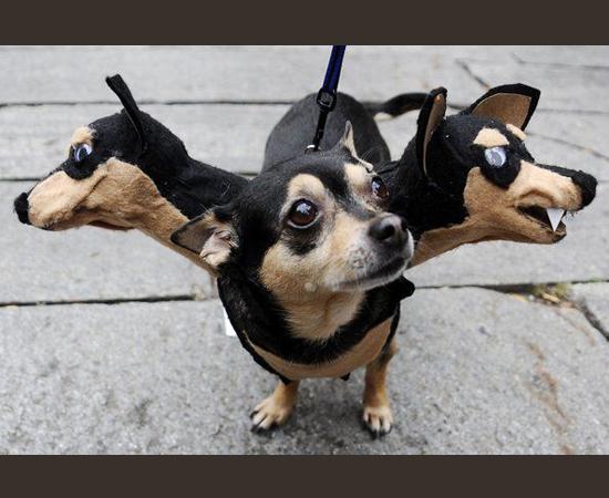 Fantasias Halloween - Cão com 3 cabeças