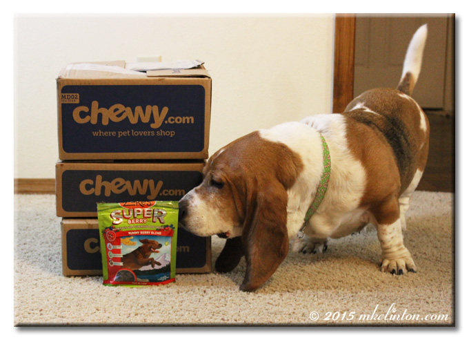 Three Chewy.com boxes, bag of Zuke's dog treats & Bentley Basset Hound