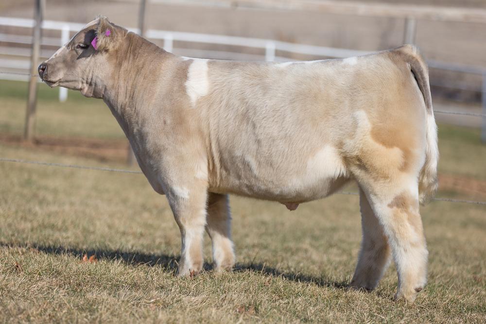 Rcc blog goretska show steers texas hold 39 em sale for Rcc home show