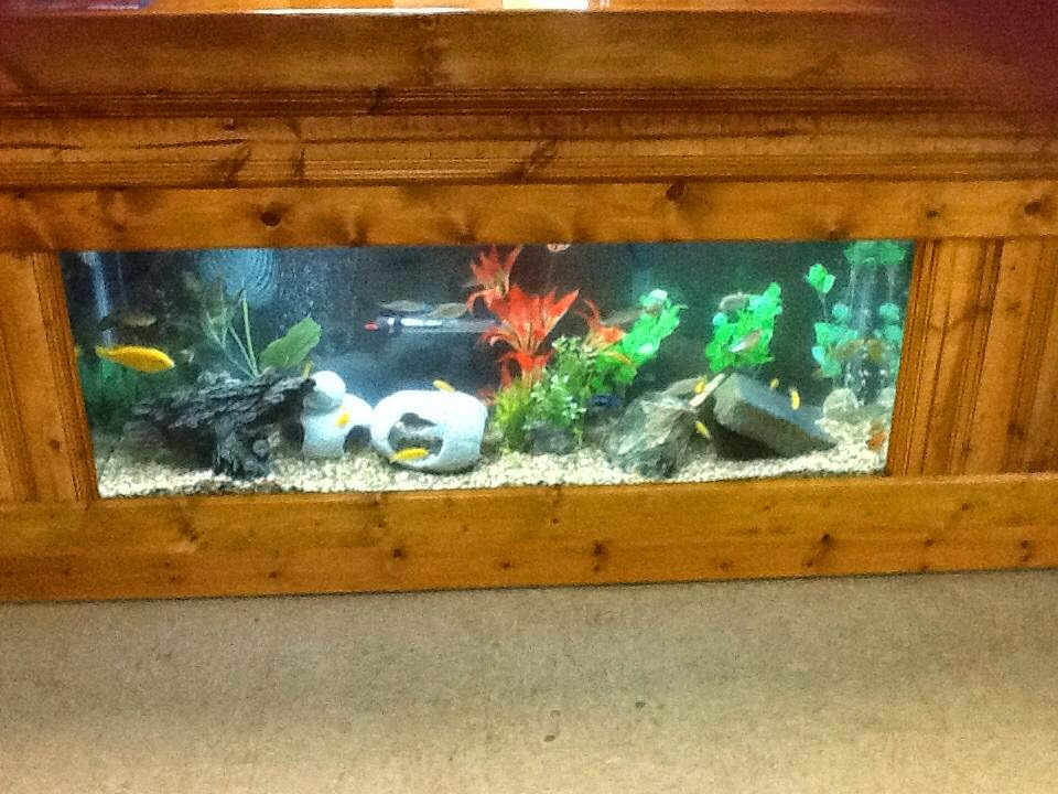 Fish Tales and Fur: Welcome to Middleburgh's Pet Store!
