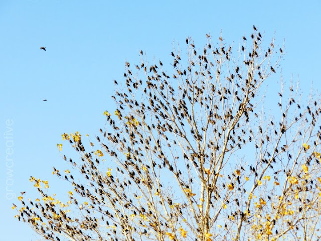 Fall birds