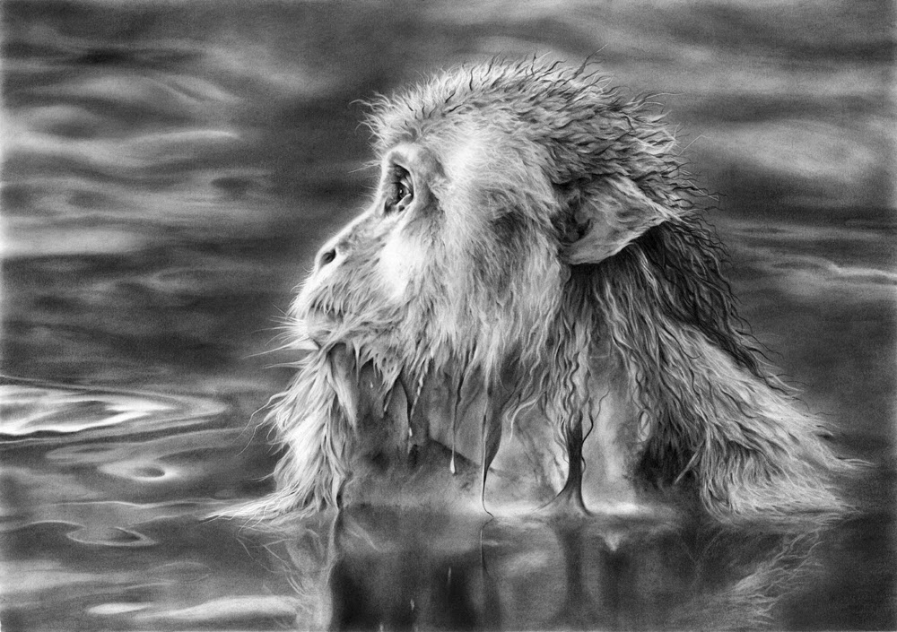07-Japanese-Macaque-Hyper-Realistic-Wildlife-Peter-Williams-www-designstack-co