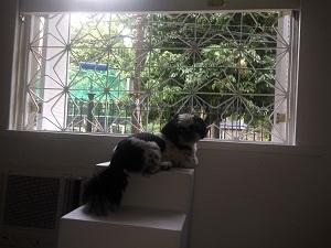 acesso a janela para cães