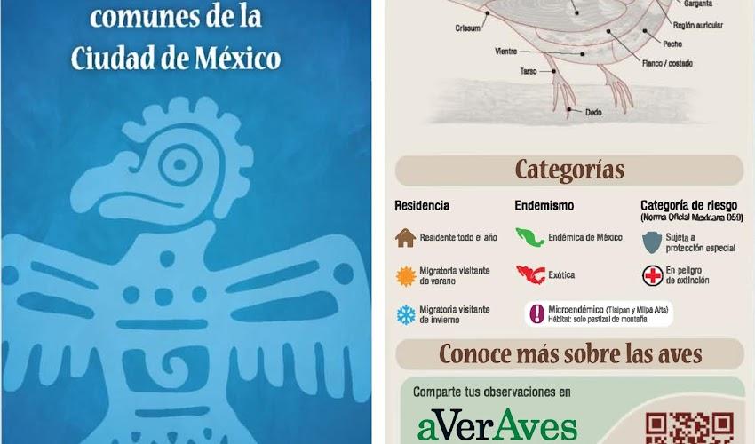Guía de Campo Aves Comunes de la Ciudad de México CONABIO