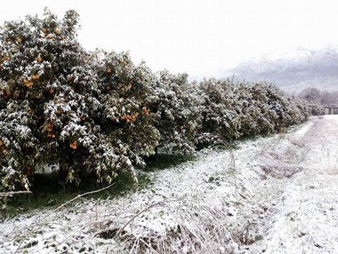 Παγετός και ζημιές σε θερμοκήπια και εσπεριδοειδή στην Πρέβεζα και τη Θεσπρωτία (+ΦΩΤΟ)