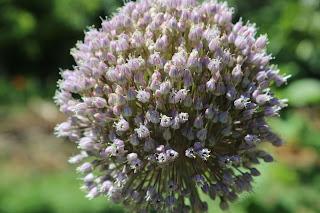 Interacção de ervas aromáticas com a pílula