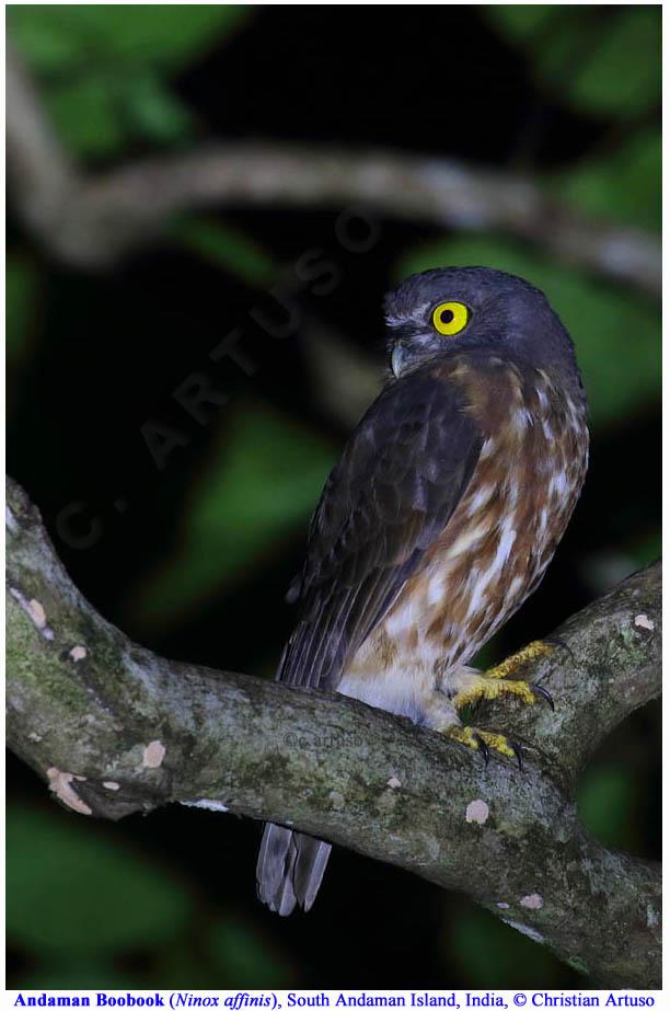 Christian Artuso: Birds, Wildlife - photo#47