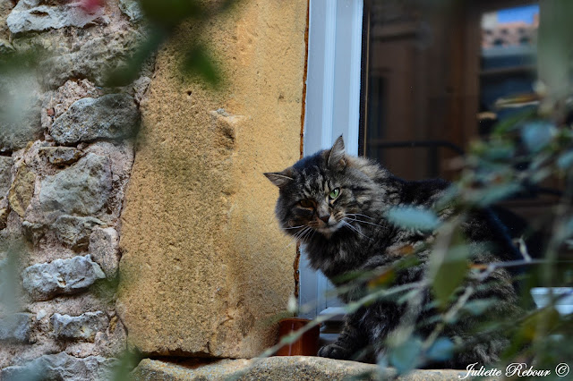 Chat, Beaujolais