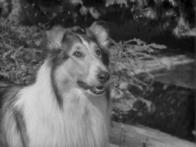 TV When I was Born: Lassie