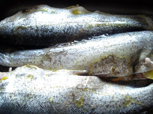 Bake the trout in oven